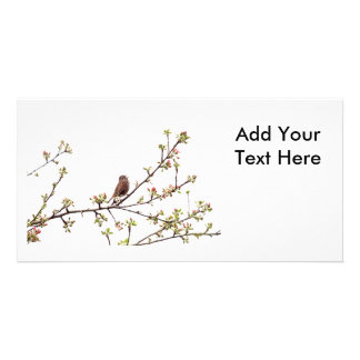 Picture of Sparrow Singing in Flowering Tree Photo Greeting Card
