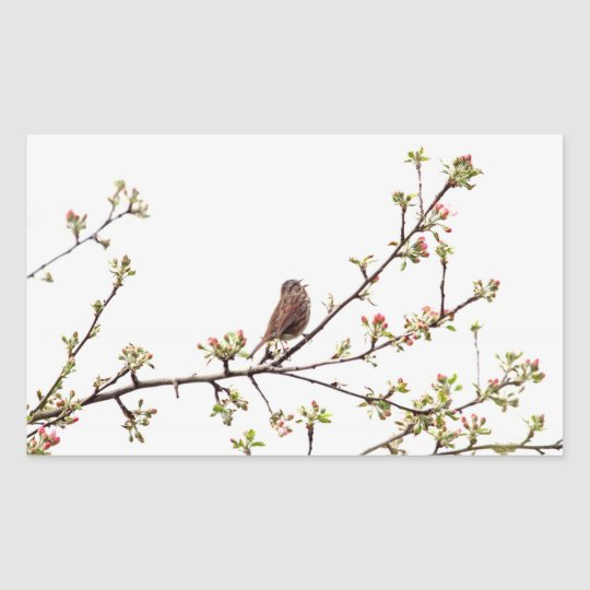 Picture of Sparrow Singing in Flowering Tree Rectangular Sticker