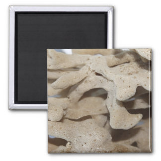 Picture of Sponge. 2 Inch Square Magnet