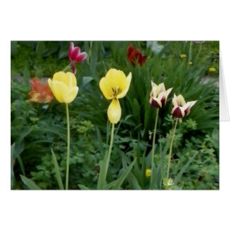 Picture of Yellow Tulips Blank Stationery Note Card