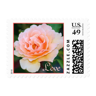 Picture Perfect Rose Love Postage