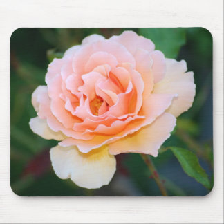 Picture Perfect Rose Mousepad