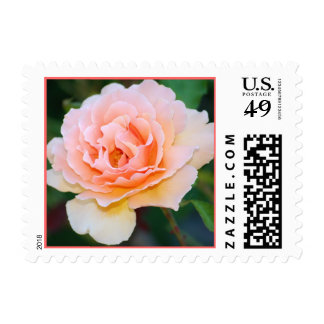 Picture Perfect Rose Postage