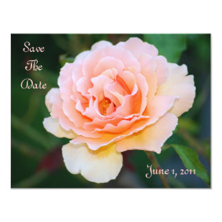 """Picture Perfect Rose Save The Date 4.25"""" X 5.5"""" Invitation Card"""