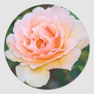 Picture Perfect Rose Stickers