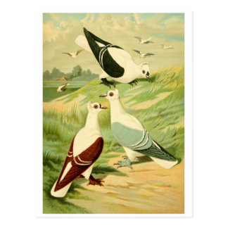 pictures of birds gifts postcards online postcards