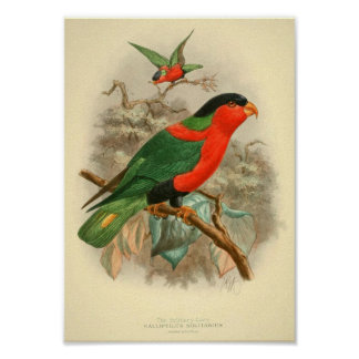 pictures of birds gifts posters vintage posters