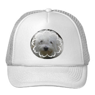Pictures of Maletese Baseball Hat