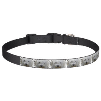 Pictures of Maltese Pet Collar