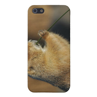 Pictures of Prairie Dogs iPhone 4 Case