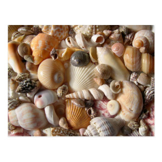 Pictures of Seashells Photography Postcard