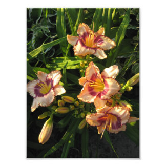 Picturesque Lilies Touched By The Golden Hour Art Photo