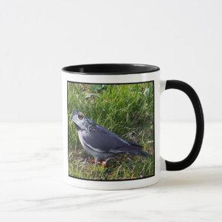 Pidgetoad mug