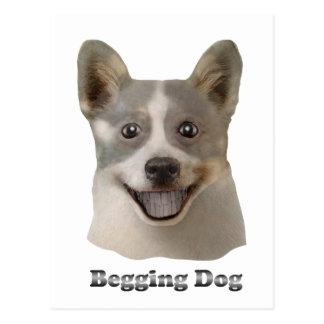 Pidiendo el perro con el texto - productos de Mult Postal
