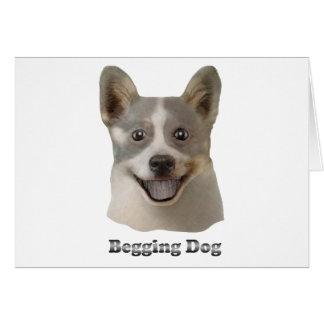 Pidiendo el perro con el texto - productos de Mult Tarjeta De Felicitación