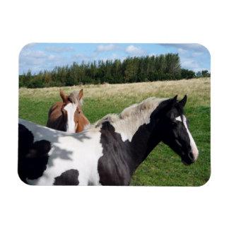 Piebald & Chestnut Horses Photograph Magnet