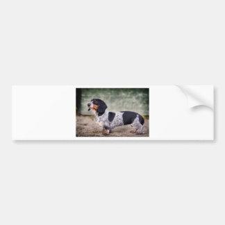 Piebald dachshund bumper sticker