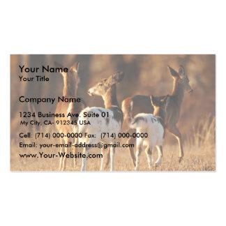 Piebald deer business cards