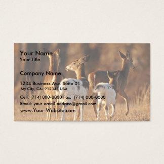 Piebald deer business card
