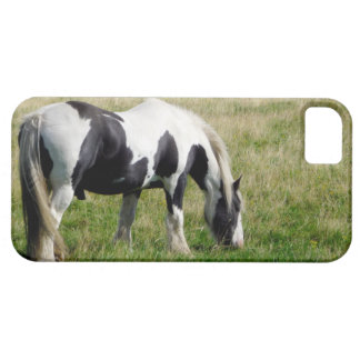 Piebald Horse Grazing on Grassy Hill Photograph iPhone 5 Cover