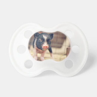 Piebald Pig puppy for Pig Lovers BooginHead Pacifier
