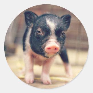 Piebald Pig puppy for Pig Lovers Classic Round Sticker