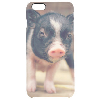 Piebald Pig puppy for Pig Lovers Clear iPhone 6 Plus Case