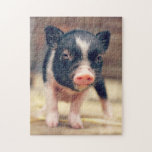 "Piebald Pig puppy for Pig Lovers Jigsaw Puzzle<br><div class=""desc"">Piebald Pig puppy for Pig Lovers                                        &quot;pig pink&quot;,  &quot;baby pig&quot;,  &quot;cute pig&quot;,  &quot;funny pig&quot;,  &quot;Piebald Pig puppy &quot;,  &quot;Pig puppy&quot;,                      &quot;spotted pig&quot;,  &quot;the pig&quot;,  snout,  cute,  piglet,  pig,  &quot;pig funny&quot;,  rural,  &quot;pig cute&quot;,  &quot;cute pigs&quot;,  &quot;pink pig&quot;,  pink,  farm,  piebald,  &quot;for pig lovers&quot;, </div>"