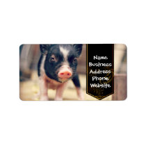 Piebald Pig puppy for Pig Lovers Label
