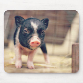 Piebald Pig puppy for Pig Lovers Mouse Pad