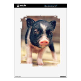 Piebald Pig puppy for Pig Lovers Skin For The iPad 2