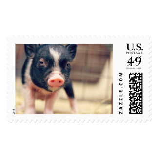 Piebald Pig puppy for Pig Lovers Stamp