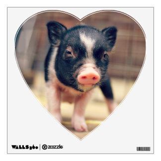 Piebald Pig puppy for Pig Lovers Wall Skins