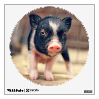 Piebald Pig puppy for Pig Lovers Wall Sticker