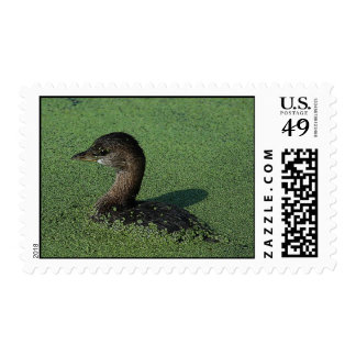 Pied-billed Grebe Postage