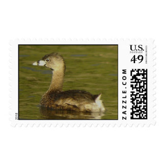 Pied-billed Grebe Stamp
