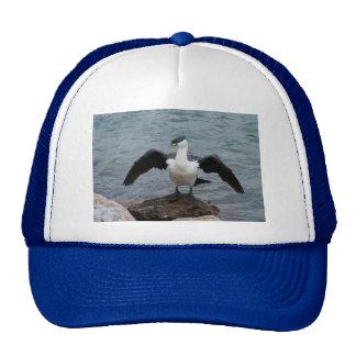 Pied Cormorant Hats