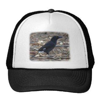 Pied Currawong 9R023D-178 Trucker Hats
