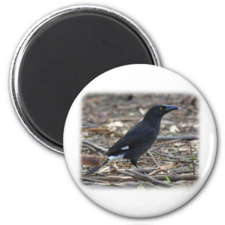 Pied Currawong 9R023D-178 Refrigerator Magnets