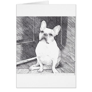 Pied Frenchie Card