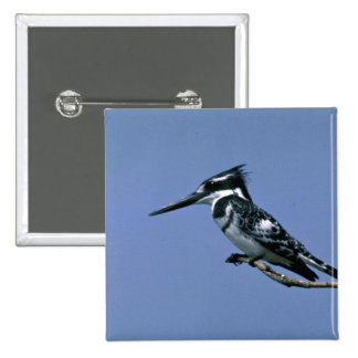 Pied Kingfisher Pinback Buttons