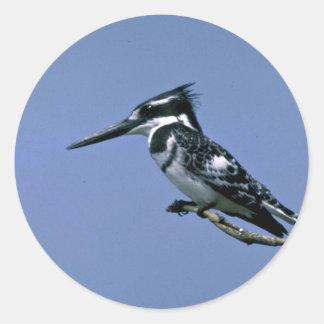 Pied Kingfisher Classic Round Sticker