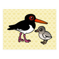 Pied Oystercatcher with chick Postcard