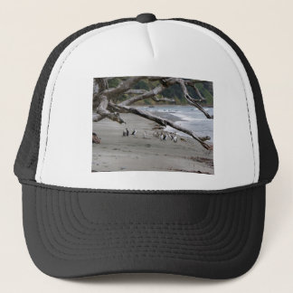 Pied Shags on the Beach Trucker Hat
