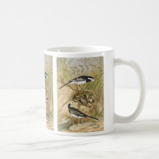 Pied Wagtail Vintage Bird Illustration Coffee Mug