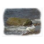 Piedra en el mar tarjeta de visita