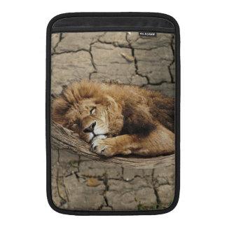 Piedra salvaje animal del gato el dormir del león funda  MacBook