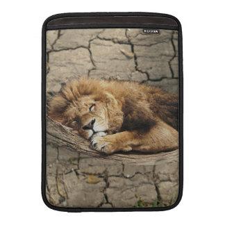 Piedra salvaje animal del gato el dormir del león fundas MacBook