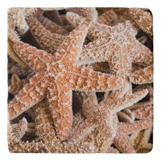 Piedra Trivets de las estrellas de mar del azúcar Salvamanteles