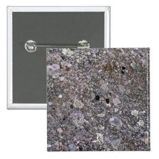 Piedra vieja cubierta por el musgo y el liquen pin
